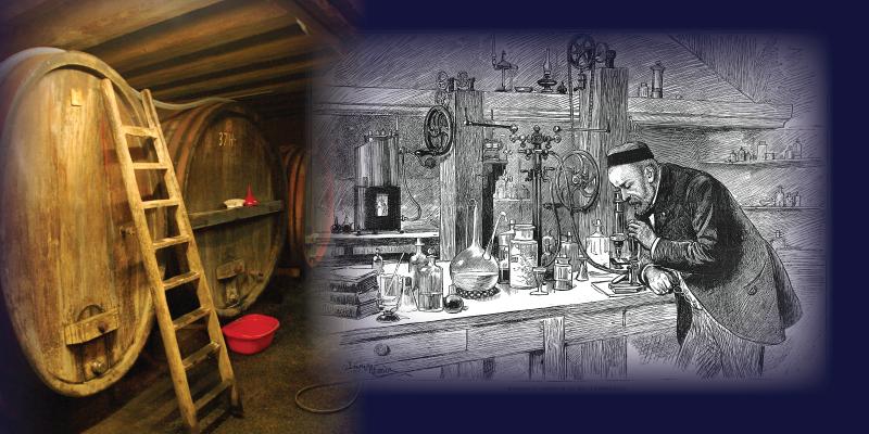 fermentation-history