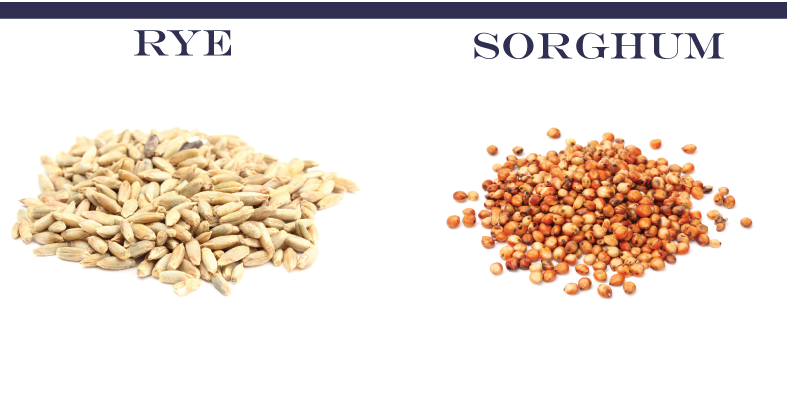 rye-sorghum